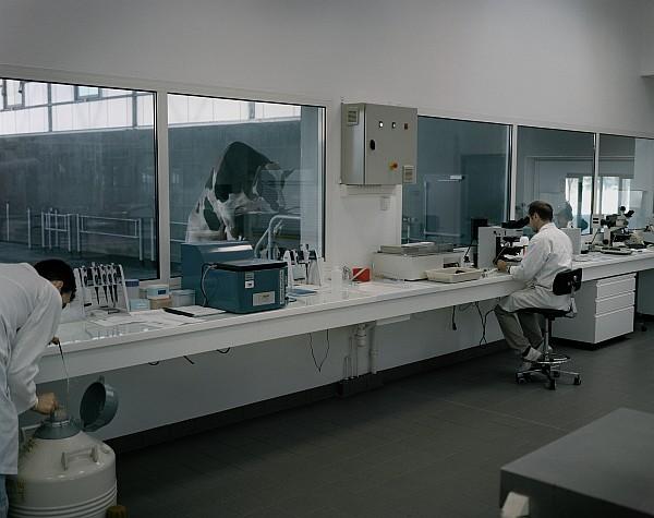 Yann Mingard Creavia, Bull sperm bank,  Saint-Aubin-du-Cormier, France, 2011 Laboratory